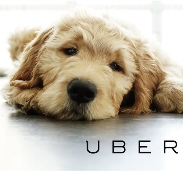 Puppies by Uber