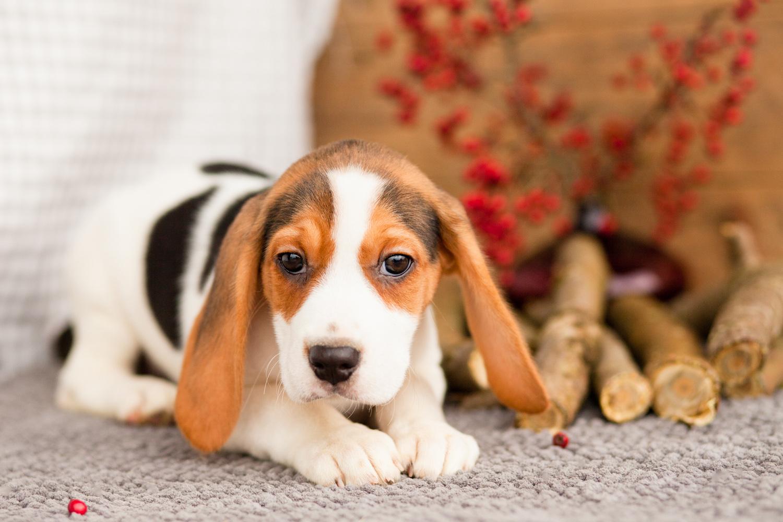 Buy Medium Sized Dog Uk