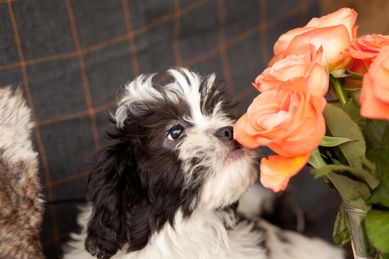 Dog Day Care Warrington Cheshire