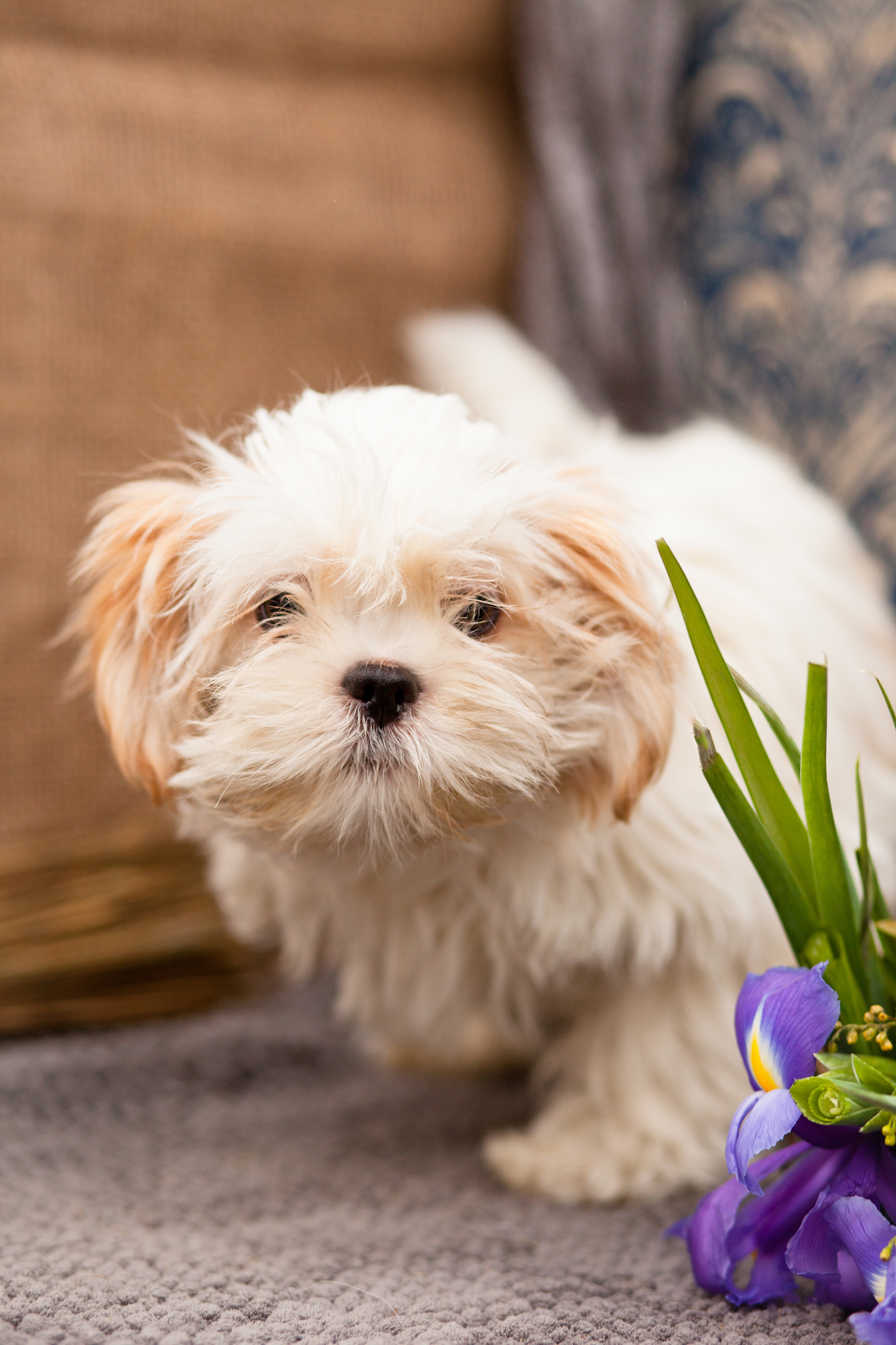 Dog Day Care Business For Sale Uk